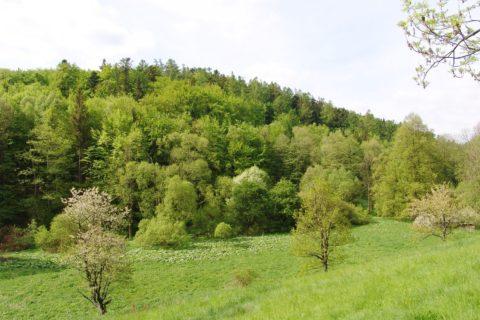 Přírodní rezervace Radim