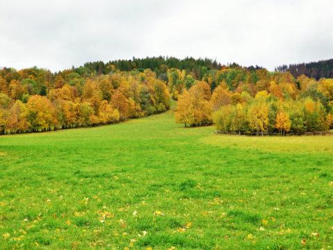 Iva Zanova, Janov / od jara do podzimu