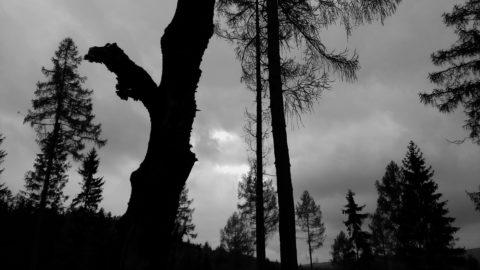 Katerina Lozertova, Petrovice / petrovicky les
