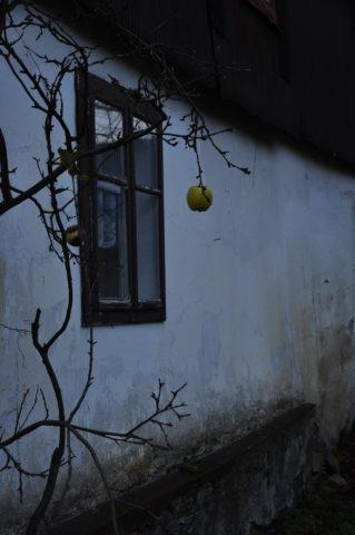 podzimni-samotari-lukas-kubacky-janov-130
